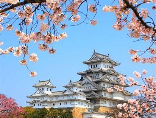 Japans kasteel met kesebloezem